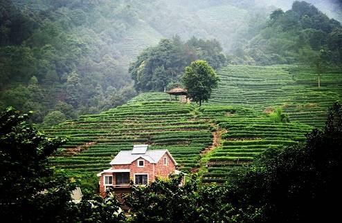 龙井茶的故乡——龙井村